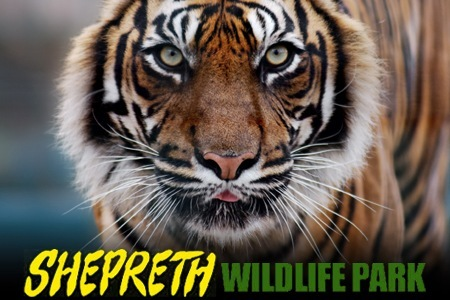Upcoming Events At Shepreth Wildlife Park Marshall